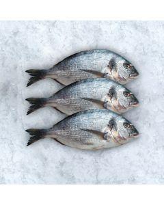 Fresh Fish Sea Bream