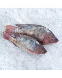 Fresh Fish Tilapia