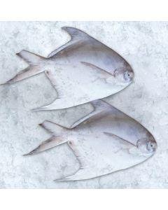 Fresh Fish Zubaidi
